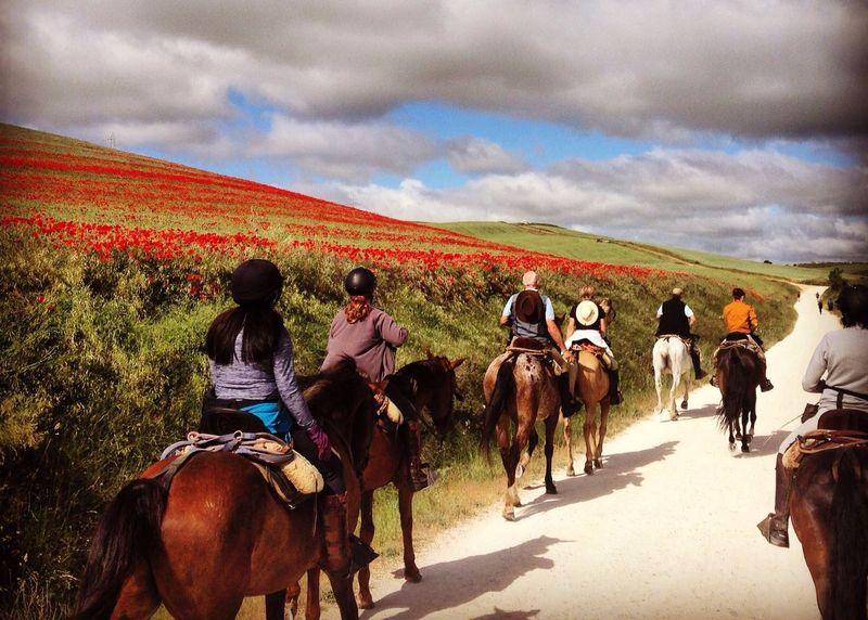 horse-riding-camino-de-santigo-spain