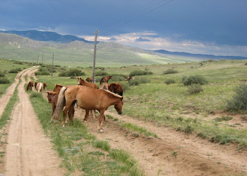 Mongolian horses standing on the road