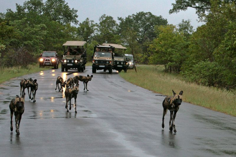 a game drive in africa