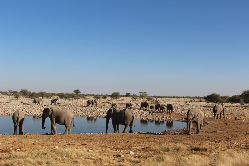 elephants in namibia
