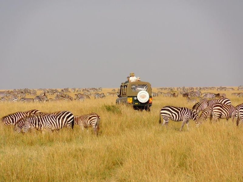 Game viewing from a safari jeep with multiple pop up roofs, in Kenya