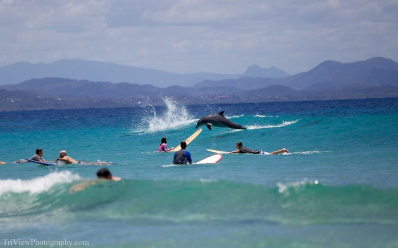 surf-with-dolphins-australia
