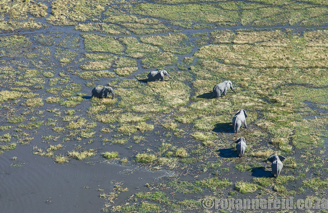 african countries for safaris : botswana chobe