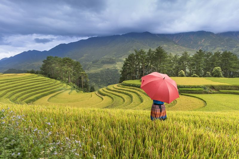 Vietnam rice terraces