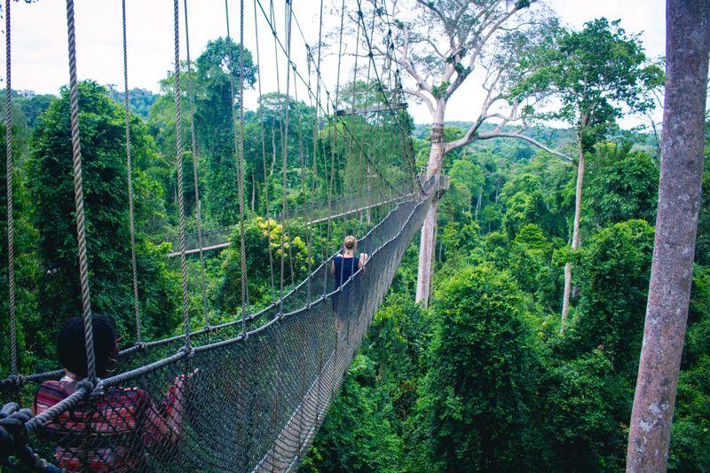 canopy walk in kakum ghana