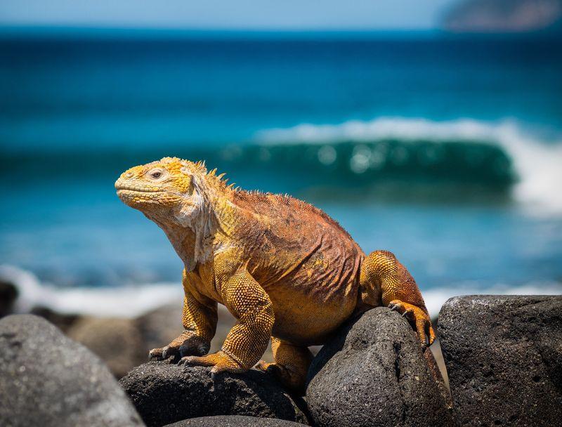 galapagos-ecuador