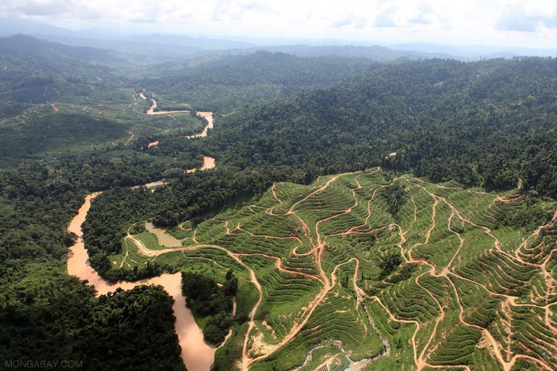 palm oil plantations deforestation