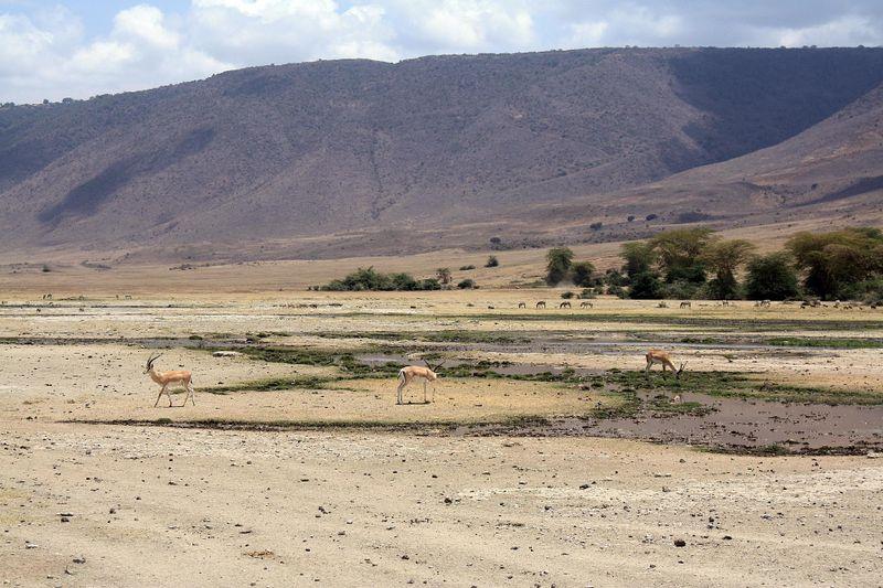 wildlife in ngorongoro crater tanzania