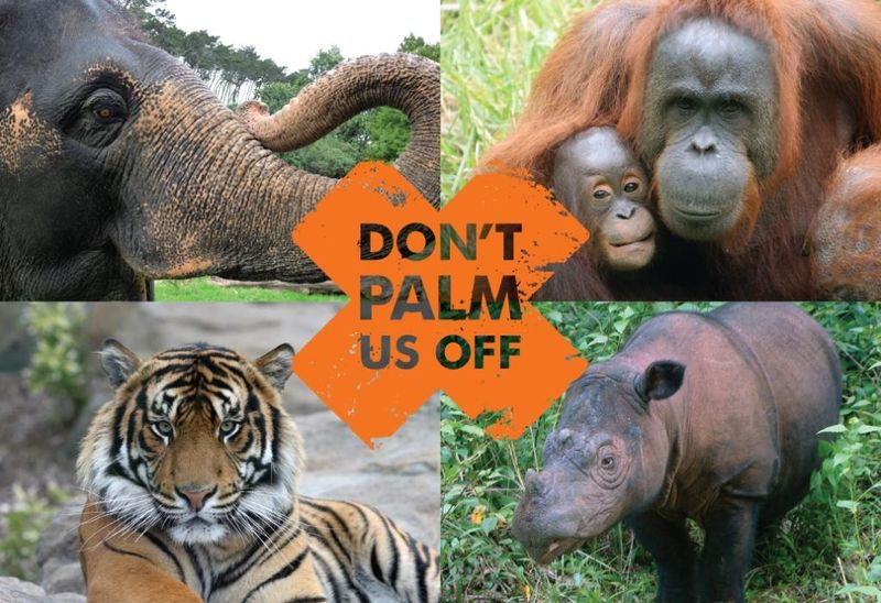 animal species endangered by palm oil
