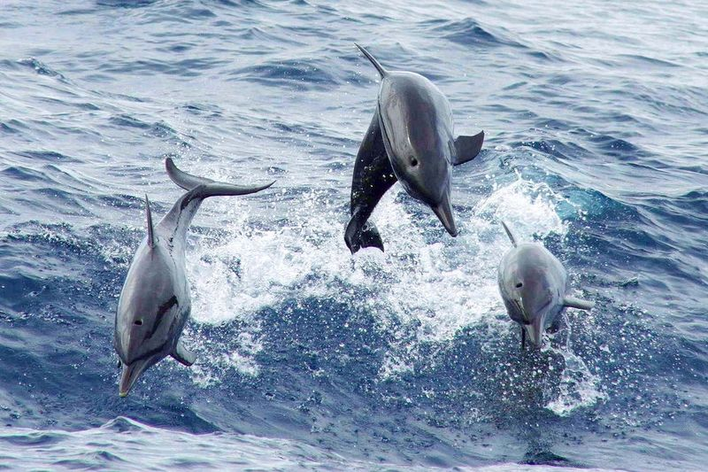 dolphins-costa-rica