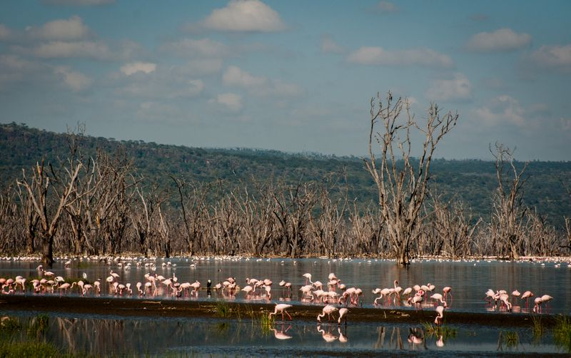 flamingos-lake-nakuru-kenya