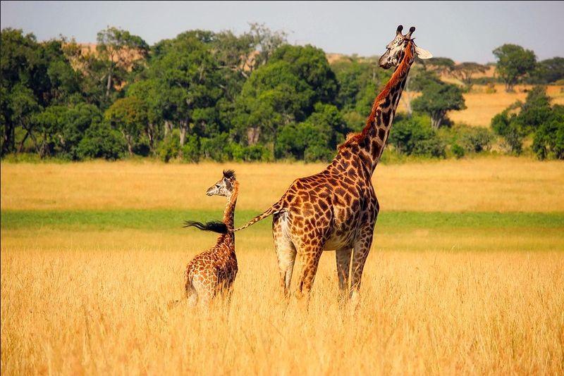 Most Popular Safari Destinations