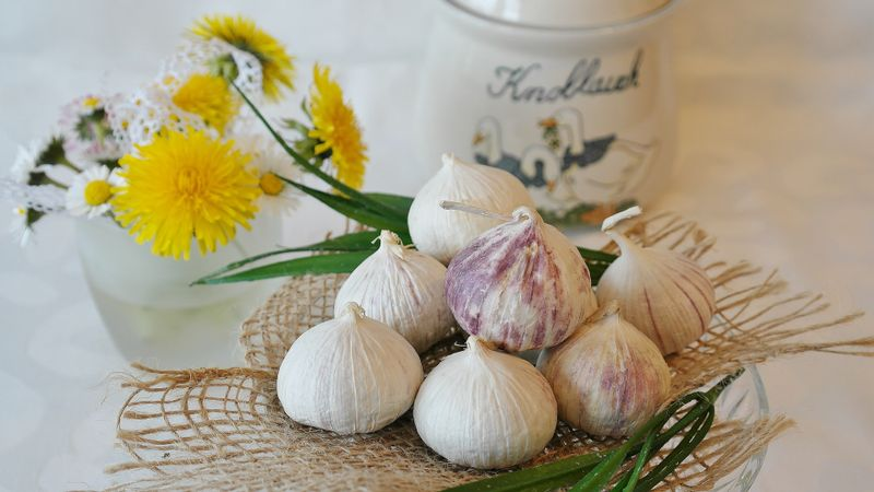 garlic protects against organ damage