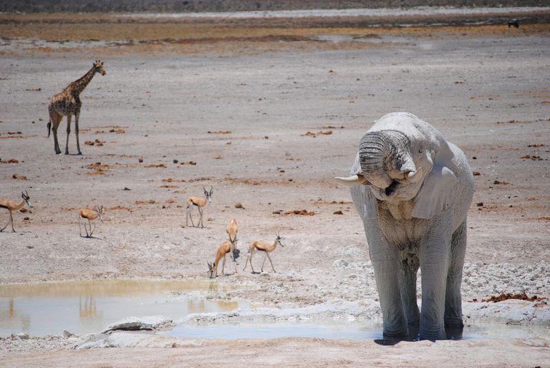 animals in etosha national park, namibia