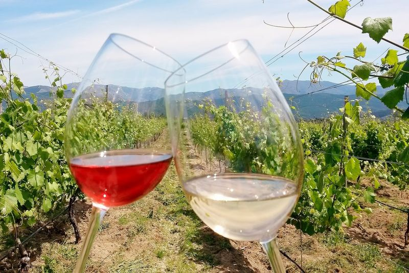 red and white wines