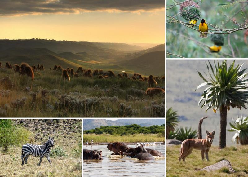 safari in ethiopia