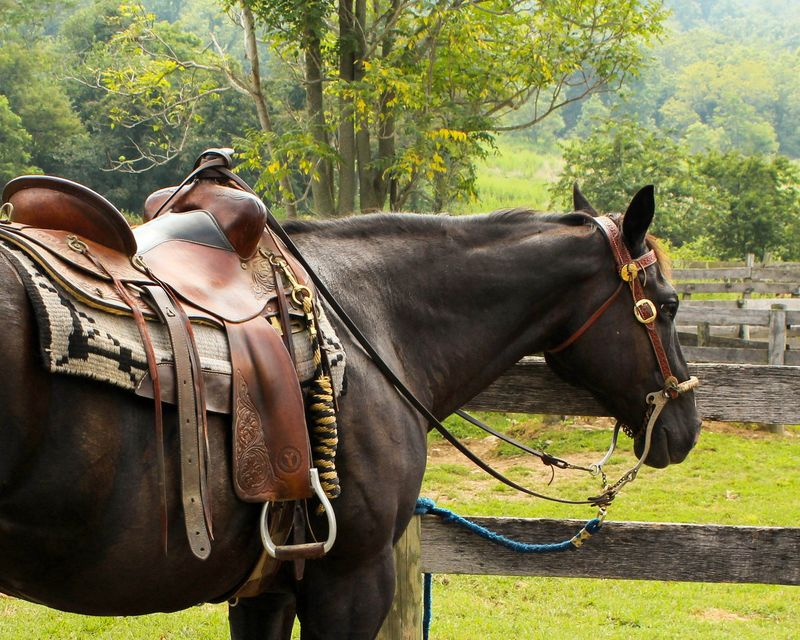 tips-beginner-horse-riders