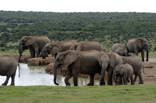 garden-route-safari