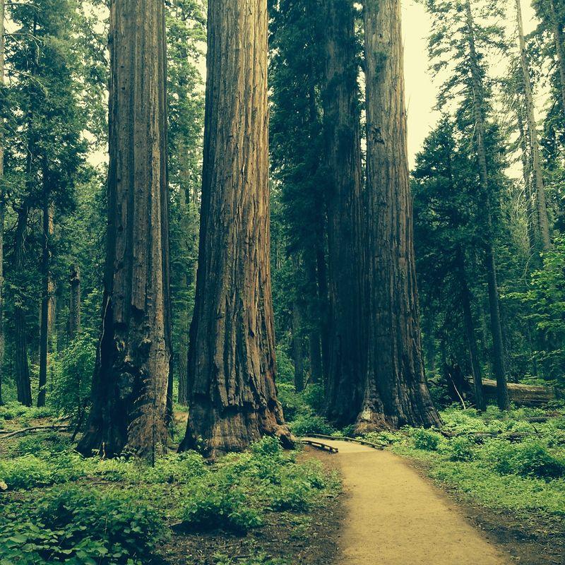 redwood guru