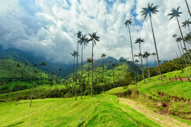 Palms and mountains view in Colombia