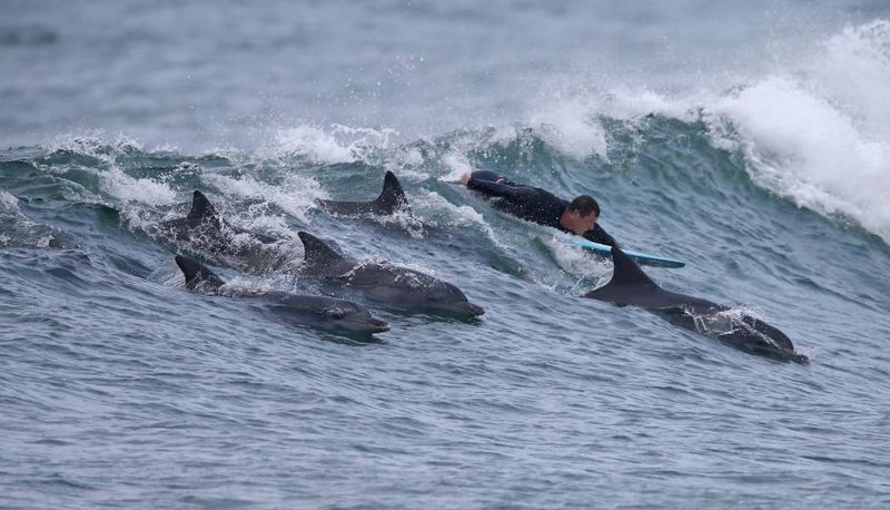 surfing-with-dolphins