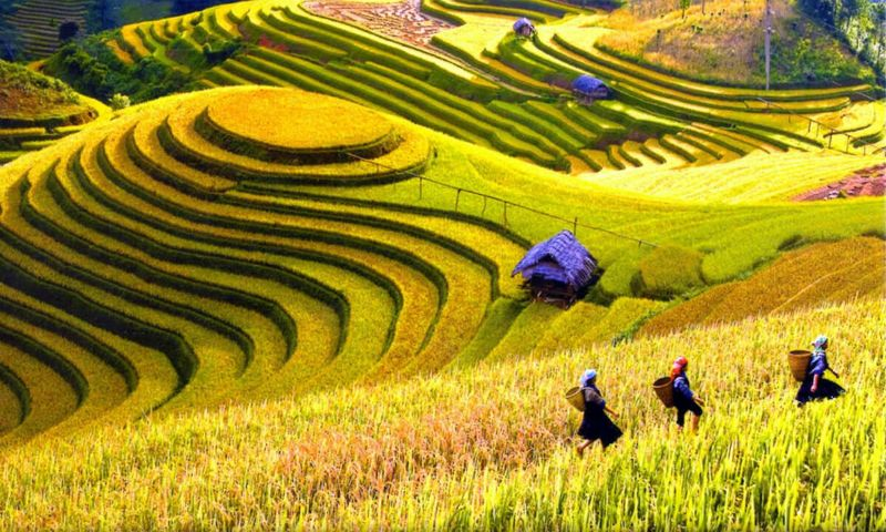 Sapa Vietnam Travel Guide