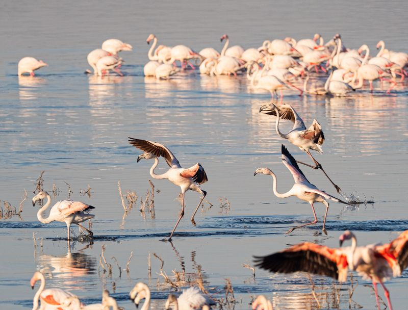 birds on lake nakuru
