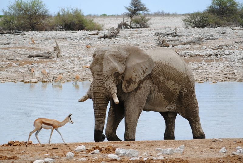 wildlife in etosha national park, namibia