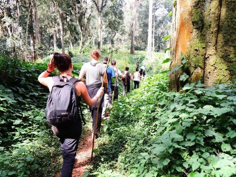 trekking gorillas in uganda