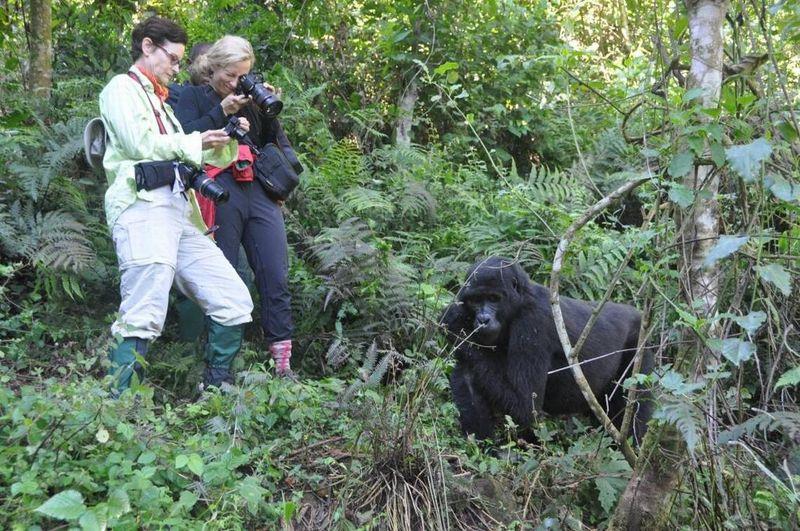 gorilla trekking in volcanoes national park in rwanda