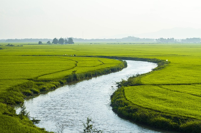 rice-fields-vietnam
