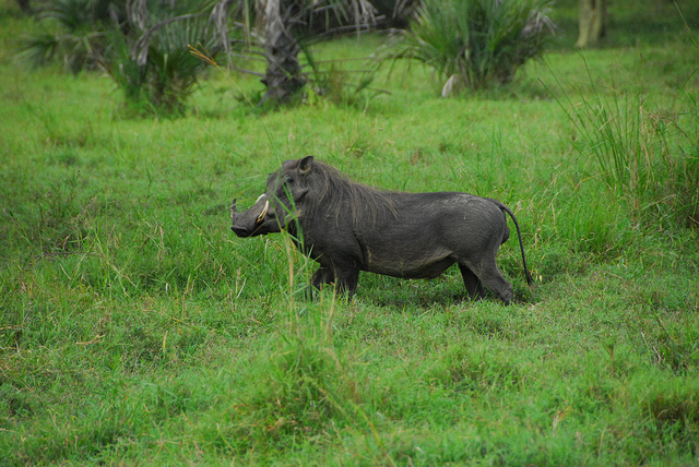 gorongosa-national-park-mozambique