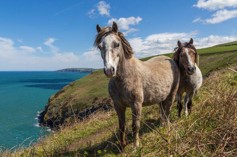 horse-riding-pembrokeshire