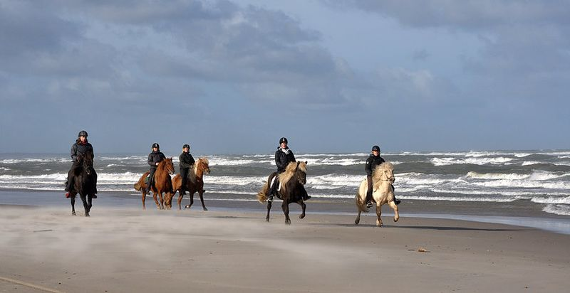 horse riding in Denmark