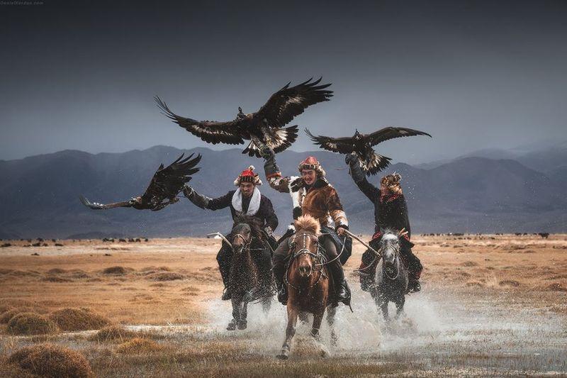 horse-culture-mongolia