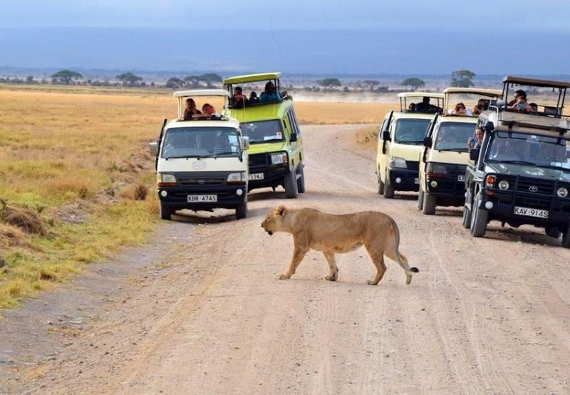 a game drive in a national park