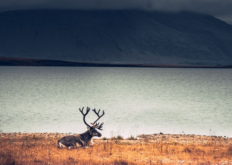 east-iceland