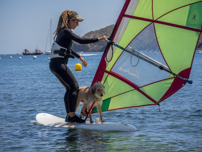 windsurfing-dog