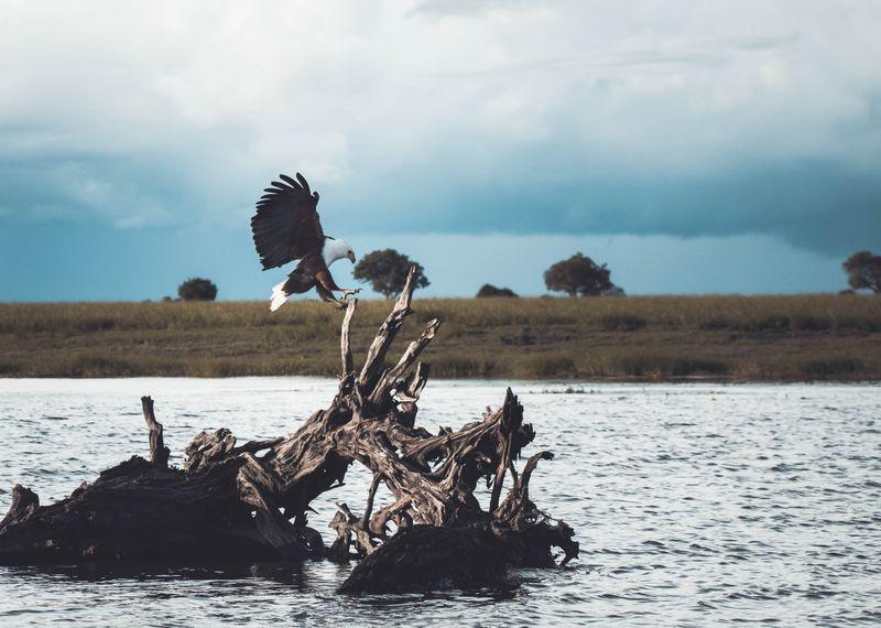 chobe-river-botswana