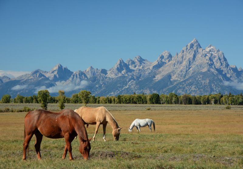 ranch-vacation-wyoming-usa