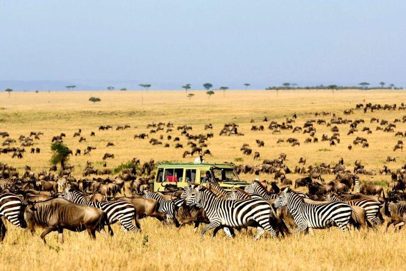 travelers in a safari