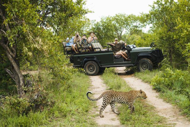 Safari group in jeep