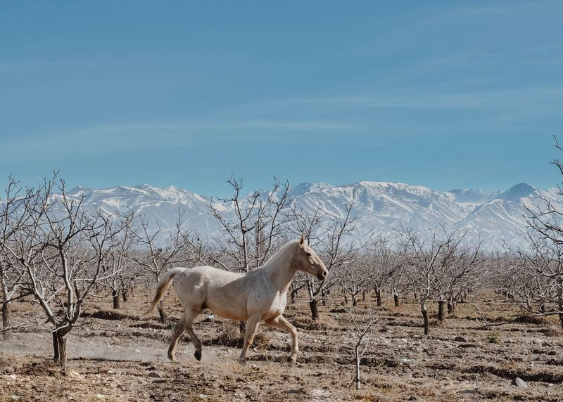 horse-riding-uco-valley-mendoza-argentina