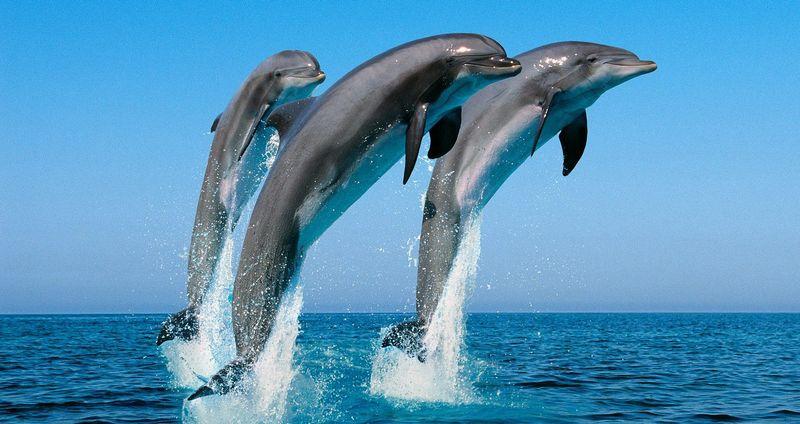 dolphins-sri-lanka