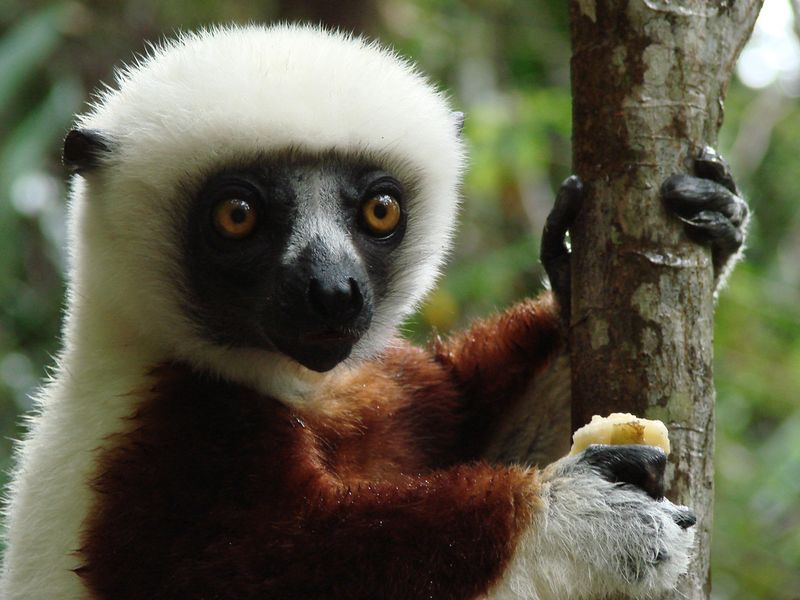 Madagascar animal
