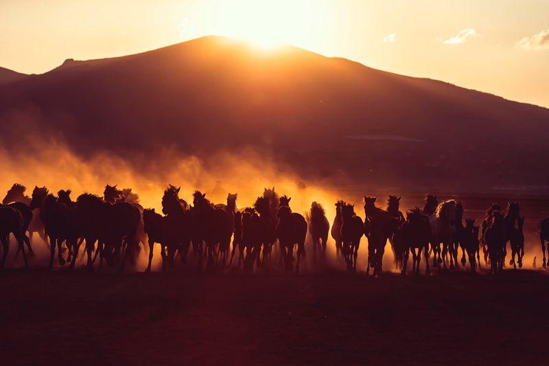 horses-cappadocia-turkey