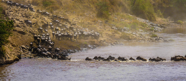 great-migration-africa