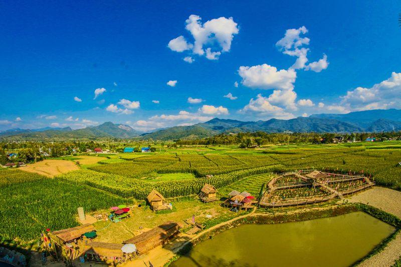 Thailand paddy field