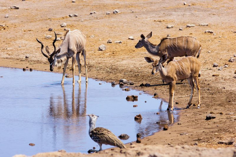animals at a waterhole in etosha national park namibia