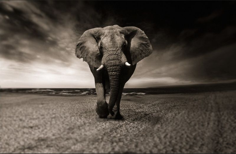 african-safari-elephant